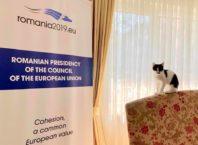 Pisică la ambasadă. Foto: Facebook
